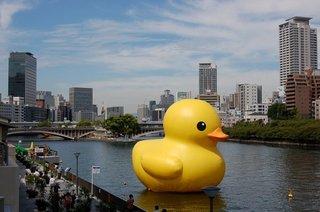 duck-b55.jpg